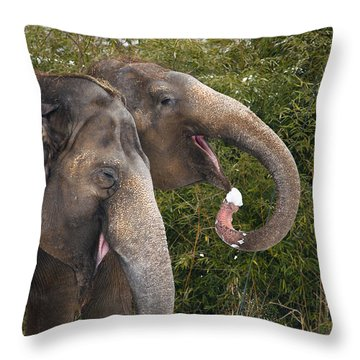 Indian Elephants Eating Snow Throw Pillow
