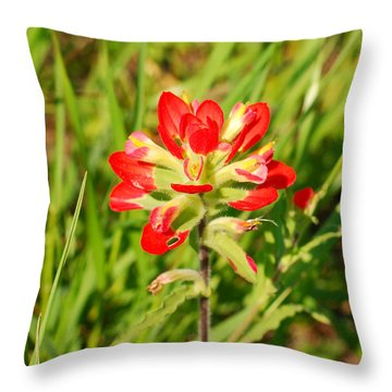 Indian Paintbrush Close Up Throw Pillow by Connie Fox