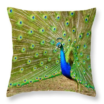 Indian Peacock Throw Pillow