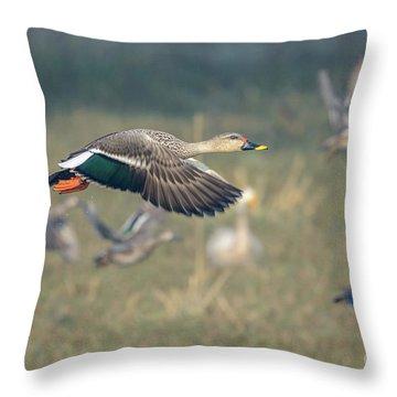 Indian Spot-billed Duck 01 Throw Pillow