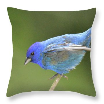 Indigo Bunting Rock Throw Pillow by Alan Lenk