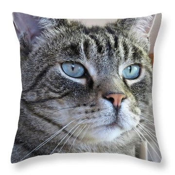 Indy Sq. Throw Pillow by Vivian Krug Cotton