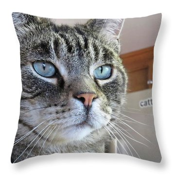 Indy Throw Pillow by Vivian Krug Cotton