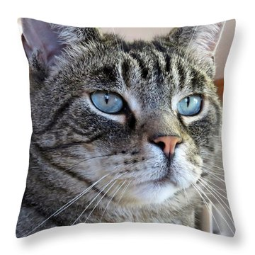 Indy With Border Throw Pillow