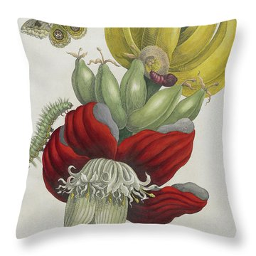 Inflorescence Of Banana, 1705 Throw Pillow by Maria Sibylla Graff Merian