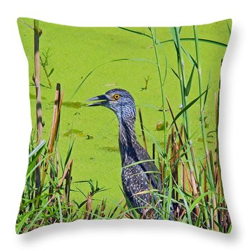 Inmature Black Crowned Heron. Throw Pillow