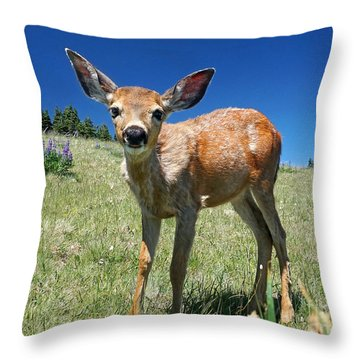 Inquisitive Blacktail Fawn Throw Pillow by Martin Konopacki