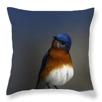 Inquisitive Bluebird Throw Pillow