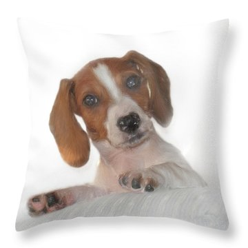 Throw Pillow featuring the photograph Inquisitive Dachshund by David and Carol Kelly