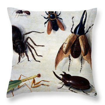 Insects, 1660 Throw Pillow