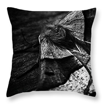 #insects #insect #bug #bugs Throw Pillow by Jason Michael Roust