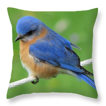 Intense Blue Bird Throw Pillow