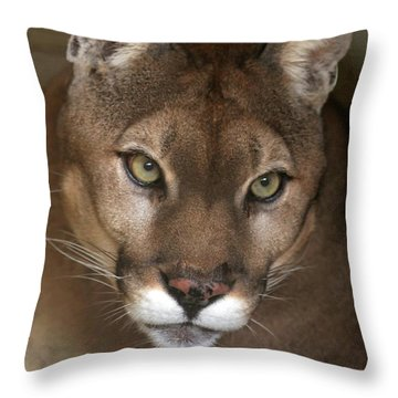 Intense Cougar Throw Pillow by Sabrina L Ryan