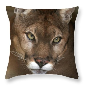 Intense Cougar Throw Pillow