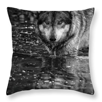 Throw Pillow featuring the photograph Intense Reflection by Shari Jardina