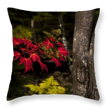 Throw Pillow featuring the photograph Intensity by Chad Dutson