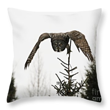 Throw Pillow featuring the photograph Intent On His Prey by Larry Ricker