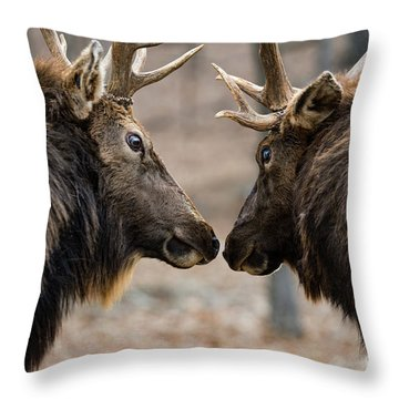 Throw Pillow featuring the photograph Intimidation by Andrea Silies