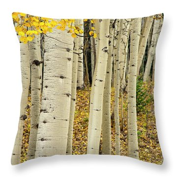 Throw Pillow featuring the photograph Into The Forest by Gary Lengyel