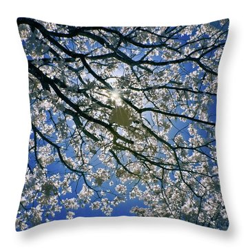 Throw Pillow featuring the photograph Into The Sun by Linda Unger