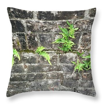 Throw Pillow featuring the photograph Intrepid Ferns by Kim Nelson
