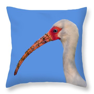 Throw Pillow featuring the photograph Intriguing Ibis .png by Al Powell Photography USA