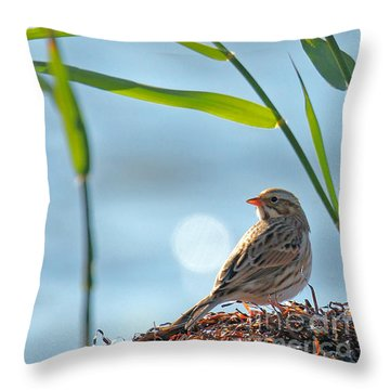 Ipswich Sparrow Throw Pillow