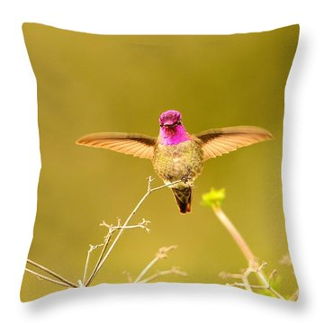 Anna's Beauty   Throw Pillow