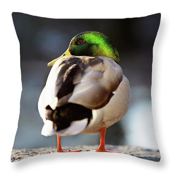 Throw Pillow featuring the photograph Iridescense by Sue Collura