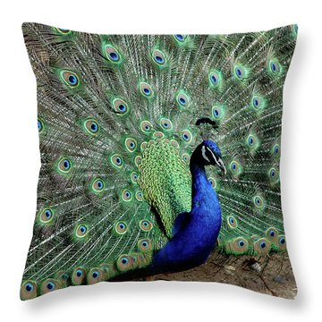 Iridescent Blue-green Peacock Throw Pillow