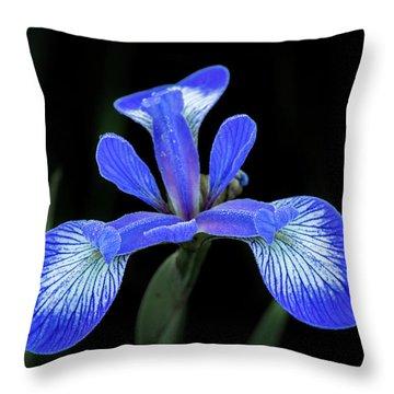 Iris #2 Throw Pillow