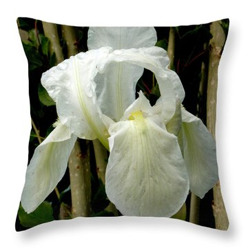 Throw Pillow featuring the photograph Iris After The Storm by Charles Ables