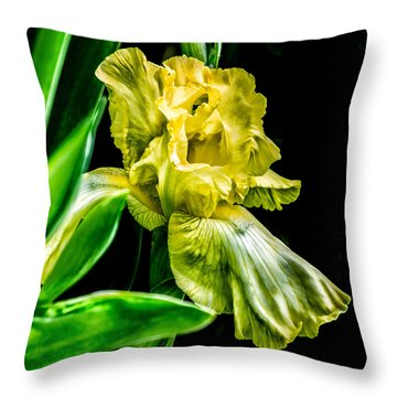 Throw Pillow featuring the photograph Iris In Bloom by Richard Ricci