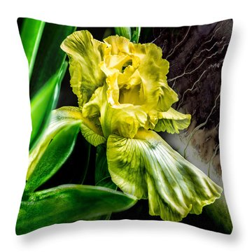 Iris In Bloom Two Throw Pillow