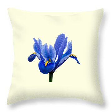 Iris Recticulata Transparent Background Throw Pillow by Paul Gulliver