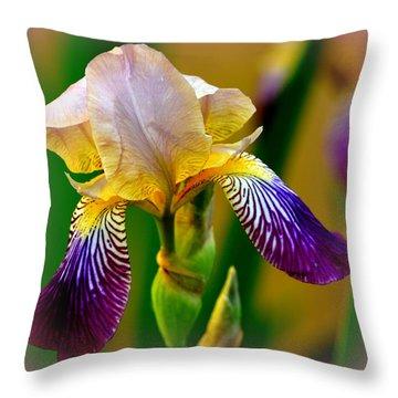 Iris Stepping Out Throw Pillow