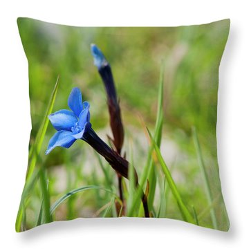 Irish Gentians Throw Pillow