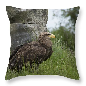 Irish Sea Eagle Throw Pillow