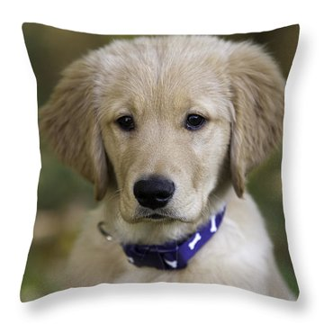 Irresistible Throw Pillow