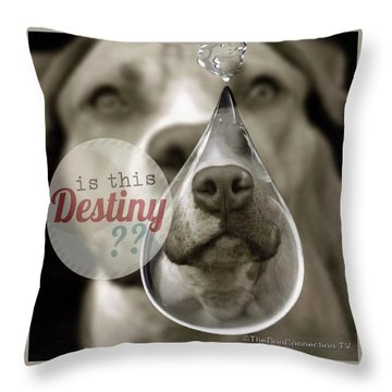 Is This Destiny Throw Pillow