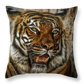 Throw Pillow featuring the photograph Is This My Best Side by Elaine Malott