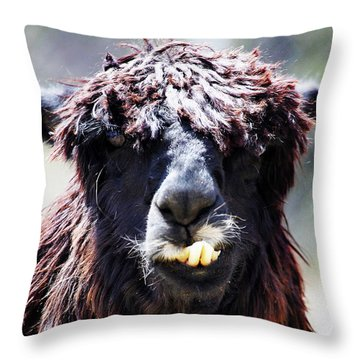 Throw Pillow featuring the photograph Is Your Mama A Llama? by Anthony Jones