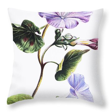 Isabella Sinclair - Pohue Throw Pillow by Hawaiian Legacy Archive - Printscapes