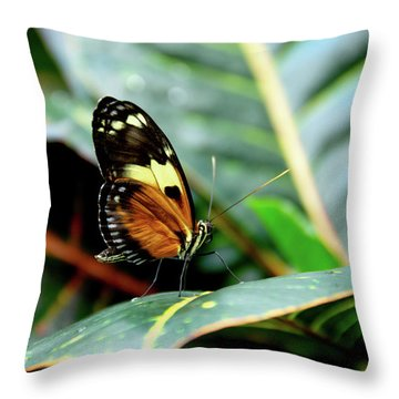 Ismenius Tiger Butterfly-2 Throw Pillow