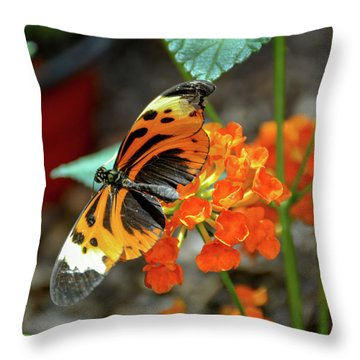 Ismenius Tiger Butterfly Throw Pillow