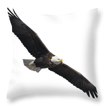 Isolated American Bald Eagle 2016-2 Throw Pillow