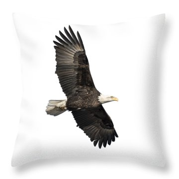 Isolated American Bald Eagle 2016-4 Throw Pillow