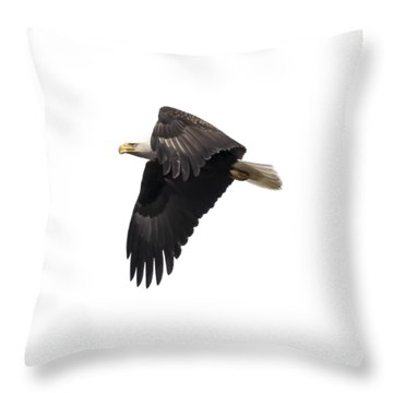 Isolated American Bald Eagle 2016-6 Throw Pillow