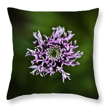 Isolated Flower Throw Pillow by Jason Moynihan
