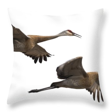 Isolated Sandhill Cranes 2016-1 Throw Pillow